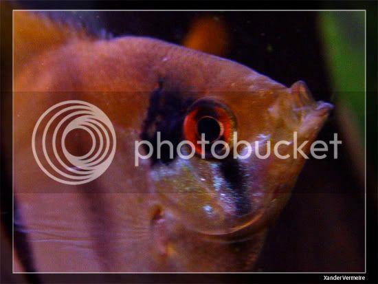 aquarium d'eXecoV - Page 9 Poi2