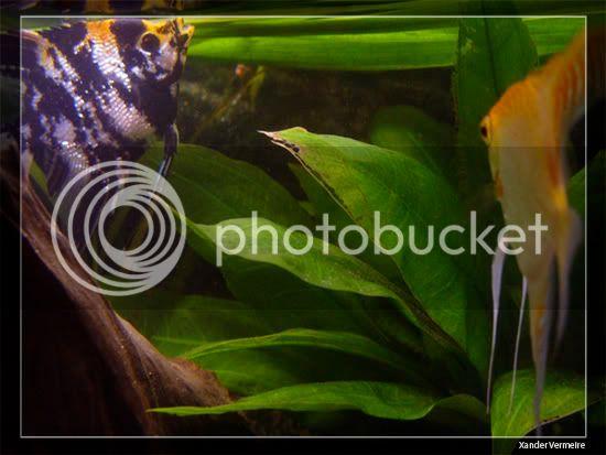 aquarium d'eXecoV - Page 9 Poi3