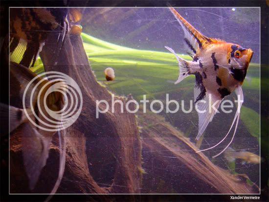 aquarium d'eXecoV - Page 9 Poi4