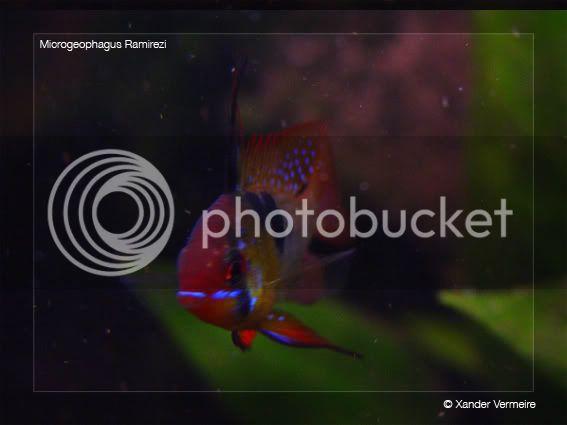 aquarium d'eXecoV - Page 5 Rami6