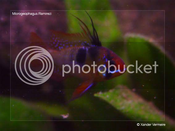 aquarium d'eXecoV - Page 5 Rami7