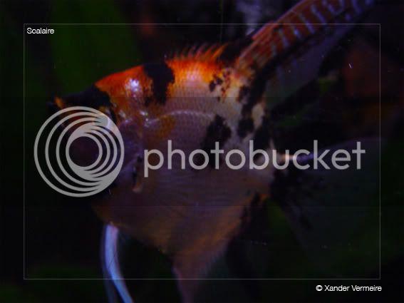 aquarium d'eXecoV - Page 4 Scal2