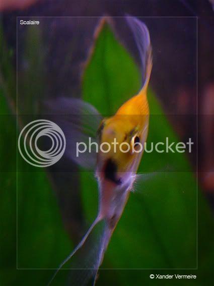 aquarium d'eXecoV - Page 4 Scal4