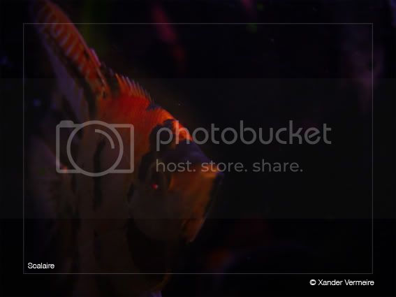 aquarium d'eXecoV - Page 5 Scal6
