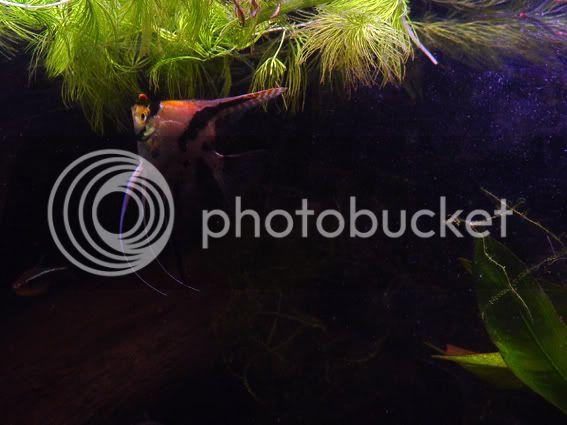 aquarium d'eXecoV Scalaire1