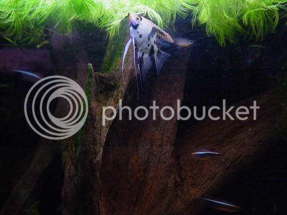 aquarium d'eXecoV Scalaire2