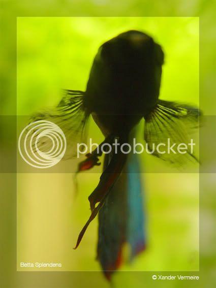 aquarium d'eXecoV - Page 4 Sunny1