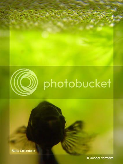 aquarium d'eXecoV - Page 4 Sunny2