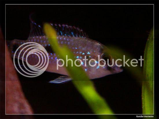 aquarium d'eXecoV - Page 10 Thomasi
