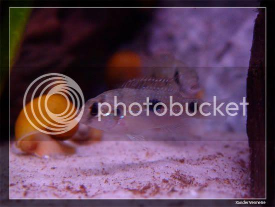 aquarium d'eXecoV - Page 10 Thomasi2
