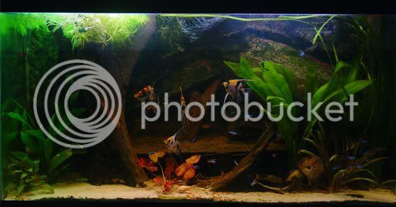 aquarium d'eXecoV - Page 3 Totaal4
