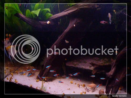 aquarium d'eXecoV - Page 8 Vis1