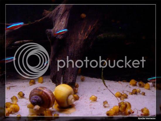 aquarium d'eXecoV - Page 8 Vis2