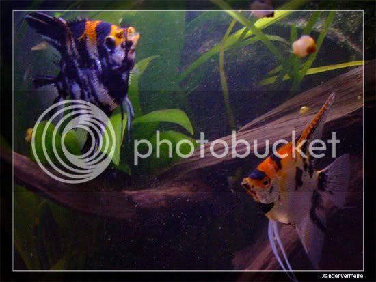 aquarium d'eXecoV - Page 8 Vis3
