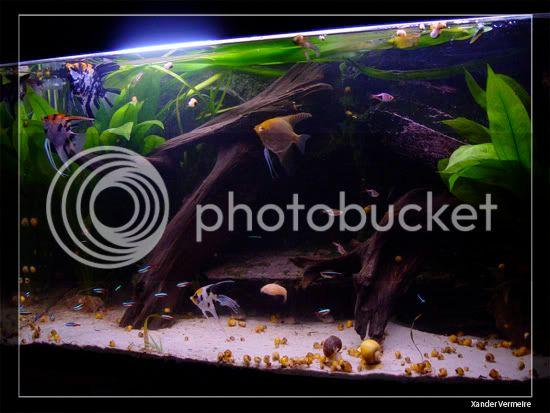 aquarium d'eXecoV - Page 8 Vis4