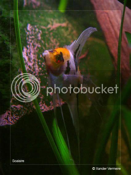 aquarium d'eXecoV - Page 4 Voil1