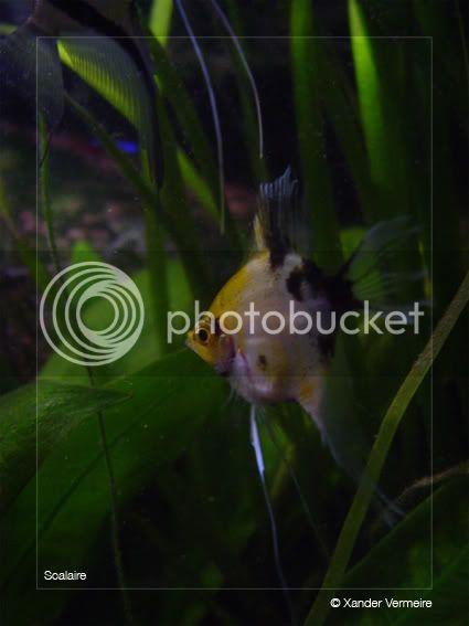 aquarium d'eXecoV - Page 4 Voil2