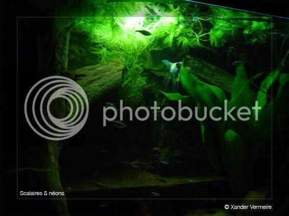 aquarium d'eXecoV - Page 2 Vuesoire