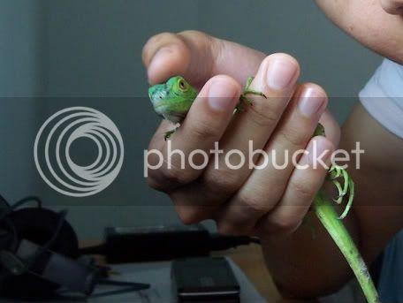 muh ex-iguana.... Max... 100_2978