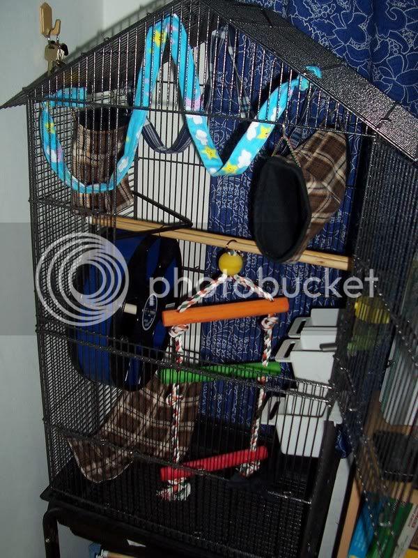 Gizmo cage 100_3857