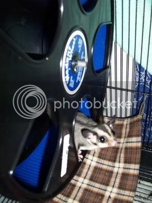 Gizmo cage 100_3952