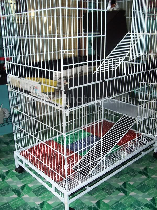 My Guinea Pigs Home Sweet Home 100_4020