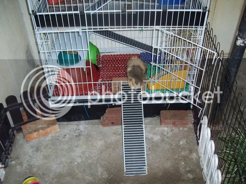 My Guinea Pigs Home Sweet Home 100_4506