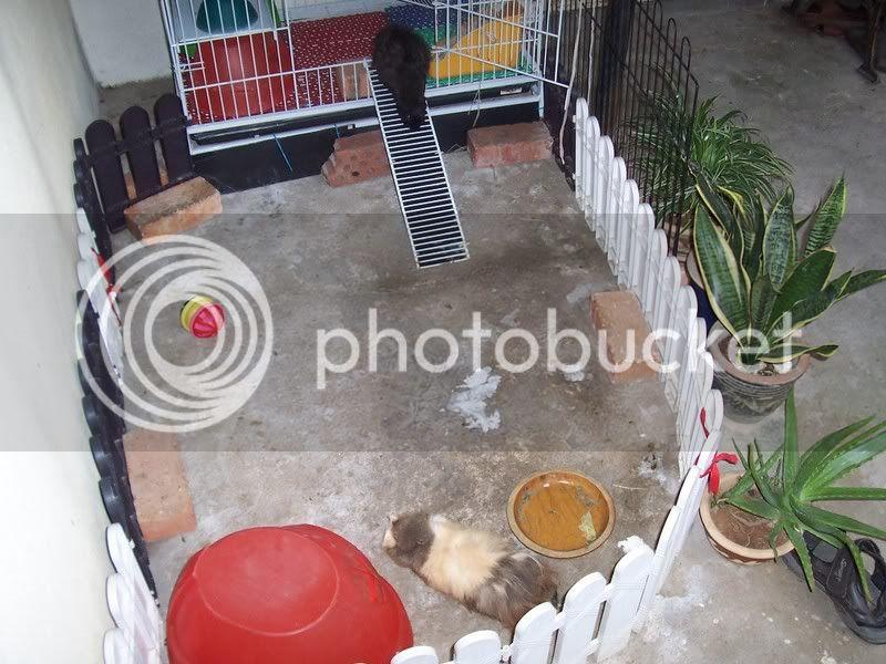 My Guinea Pigs Home Sweet Home 100_4507