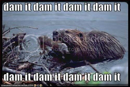 Pretty Pictures Gallore! Funny-pictures-beaver-dam-it