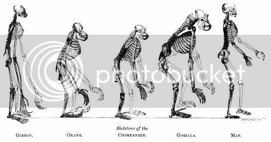 TEORÍA DE LA EVOLUCIÓN DE DARWIN. INTRODUCCIÓN 22631785