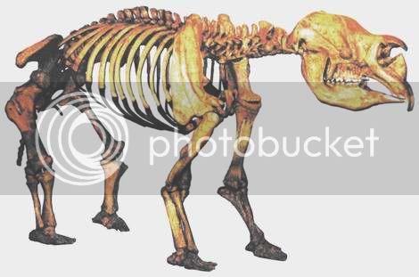 PALEONTOLOGÍA. NOCIONES Diprotodon