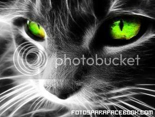 FELINA MIRADA Fotos-para-facebook-ojos-de-gatos_zpsg1apqtld