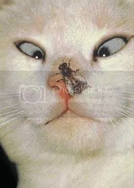 a propos du faux rhum Cat5