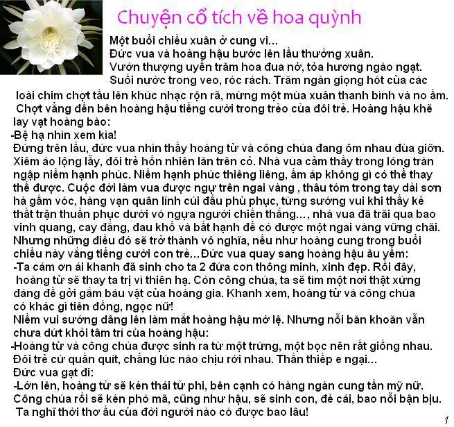 Chuyện cổ tích về hoa quỳnh HoaQuynh1