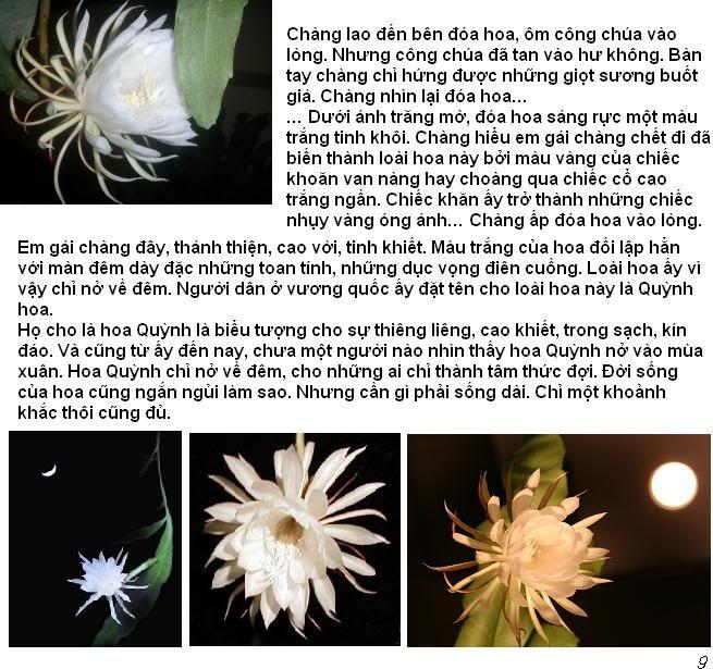 Chuyện cổ tích về hoa quỳnh HoaQuynh9