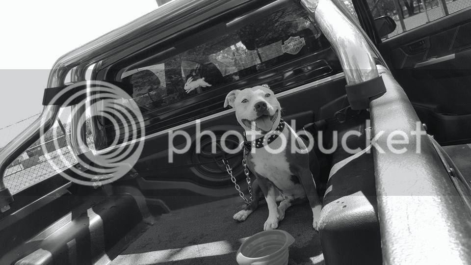 Loves a ride in my truck 1012481_10153160287724071_29321979394655757_n_zpsjvntobjc
