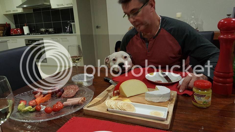 Pesky dinner guest! Koda%20dinner%20020715_zps8unlzqfa