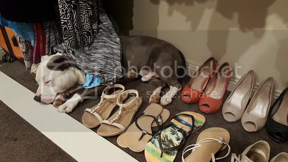 Spent 20 mins looking for the dog before bed !! Koda%20wardrobe%20A%20240916_zpsqtm4udju