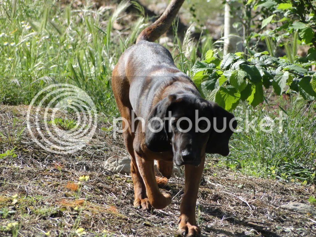 Mis perros - Página 2 DSC00042