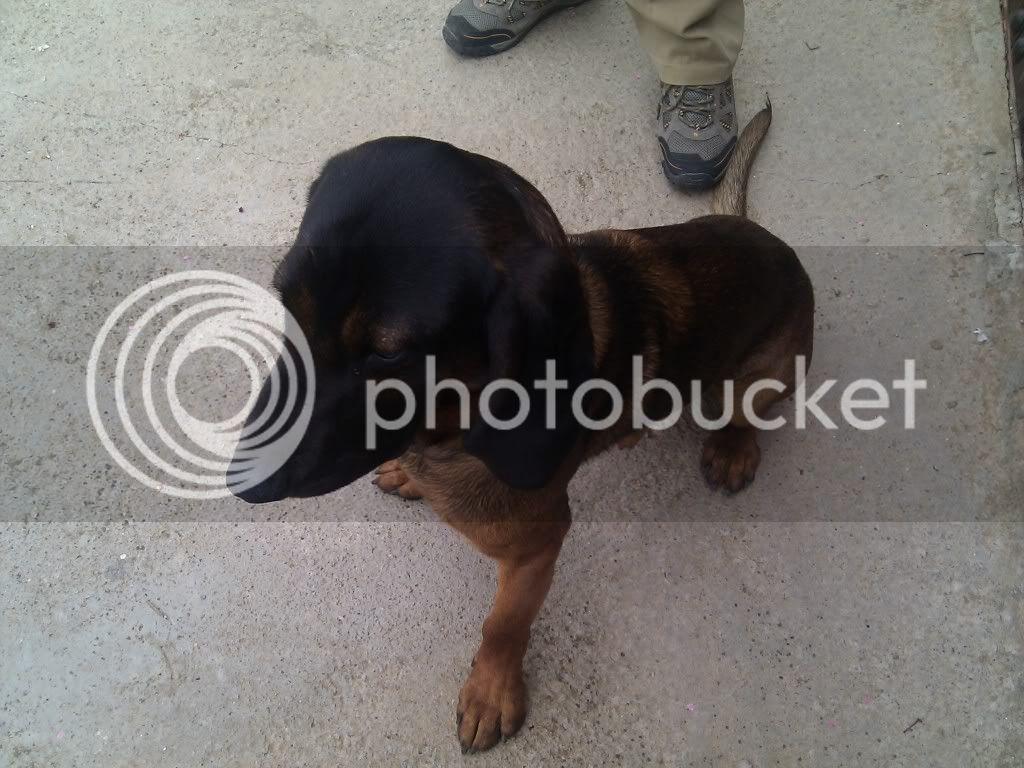 Mis perros - Página 2 IMG_19800107_125136
