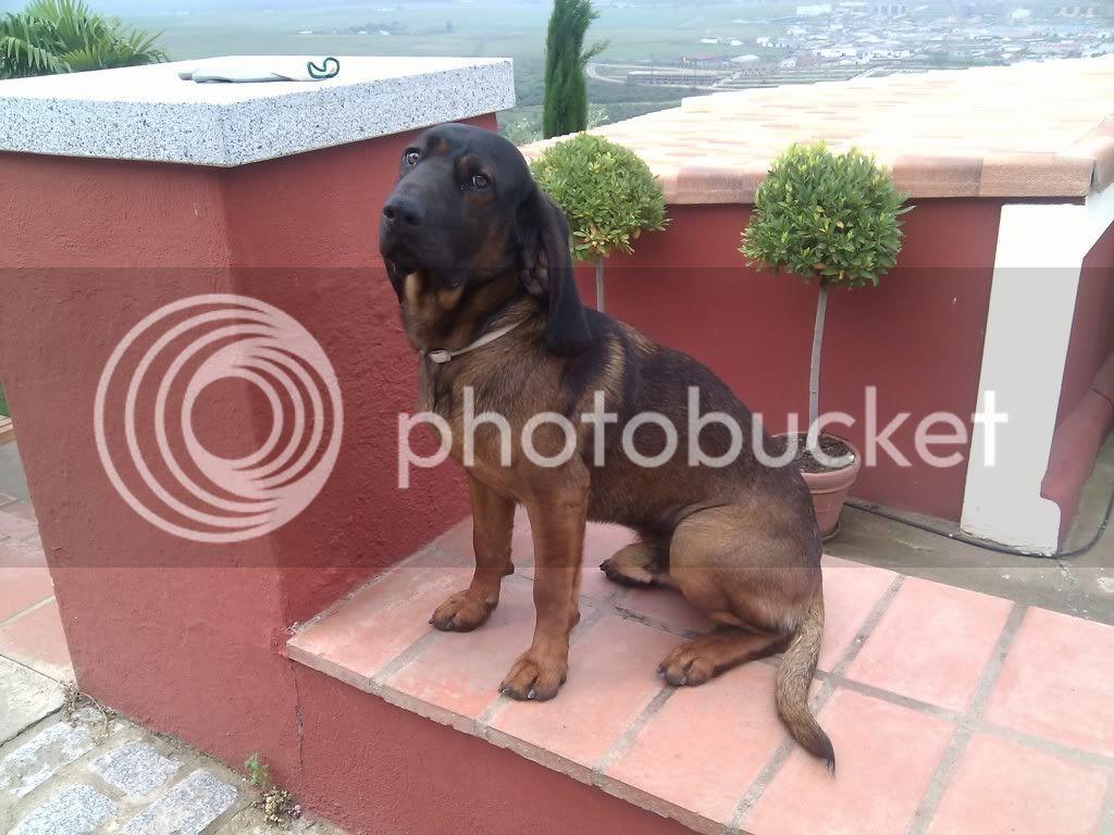 Mis perros - Página 2 IMG_19800107_125157