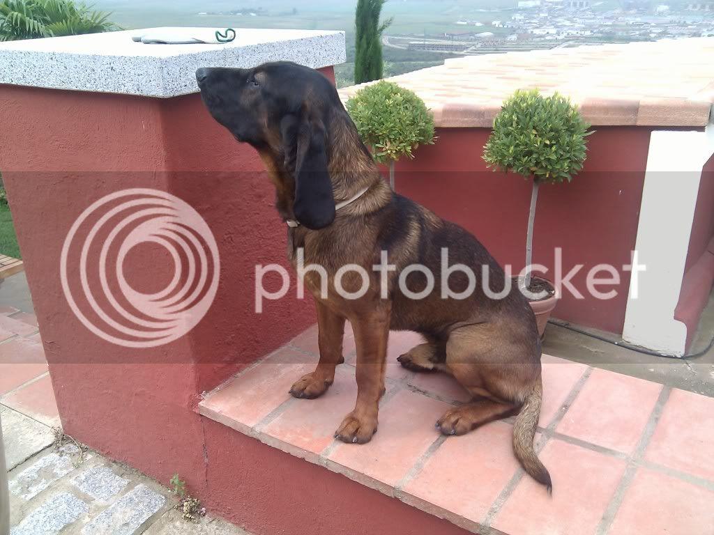 Mis perros - Página 2 IMG_19800107_125200