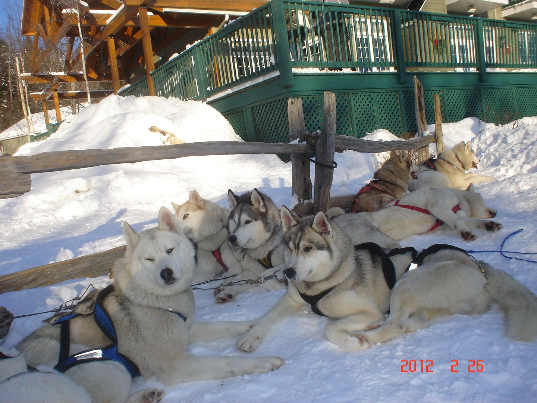 Photo ride-report Joliette/St-Tite sentier#3 et #23 26 février 2012 DSC01870