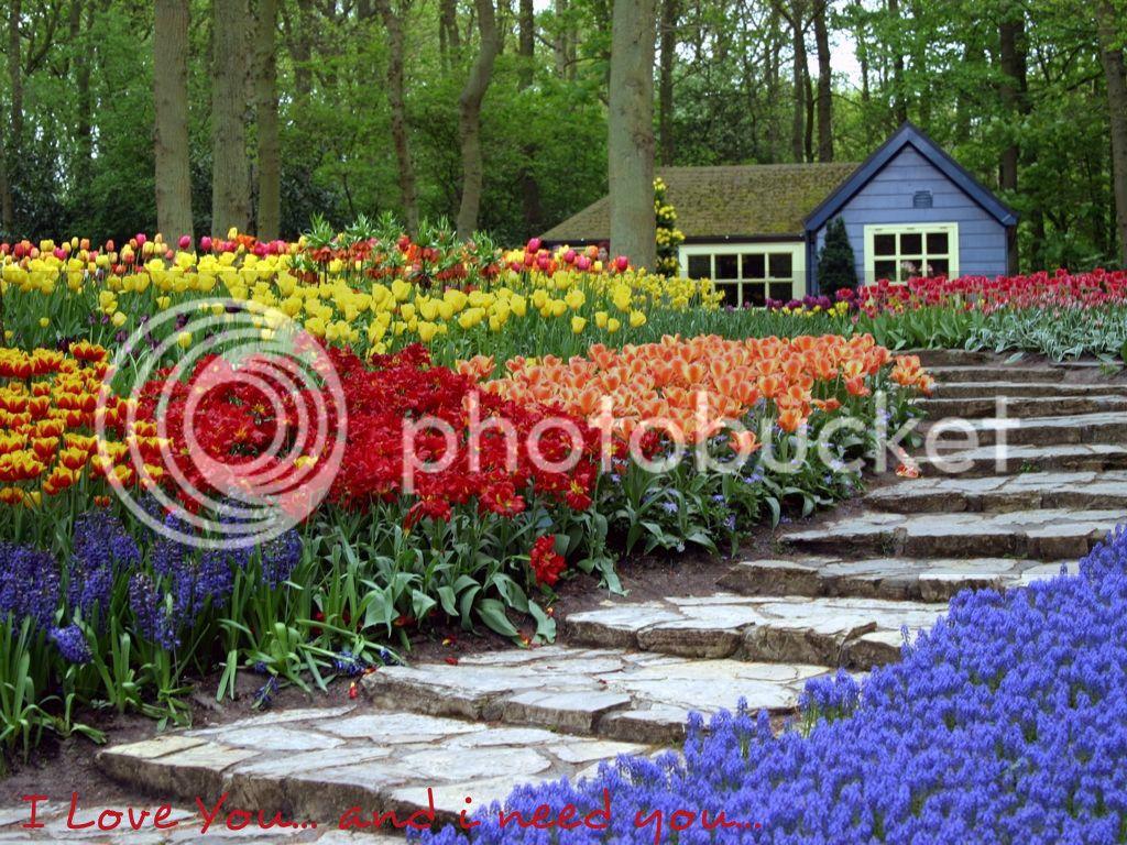 Flower Wallpapers  Flowers-wallpaper