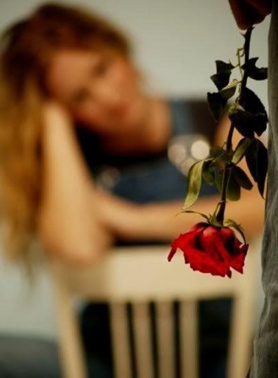 love rose flower Love_largerose