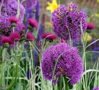 நான் ரசித்த மலர்கள் சில... - Page 8 Rhs-chelsea-flower-show