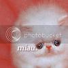 Chall nº11 - icon- Gatos GatoIconcopia