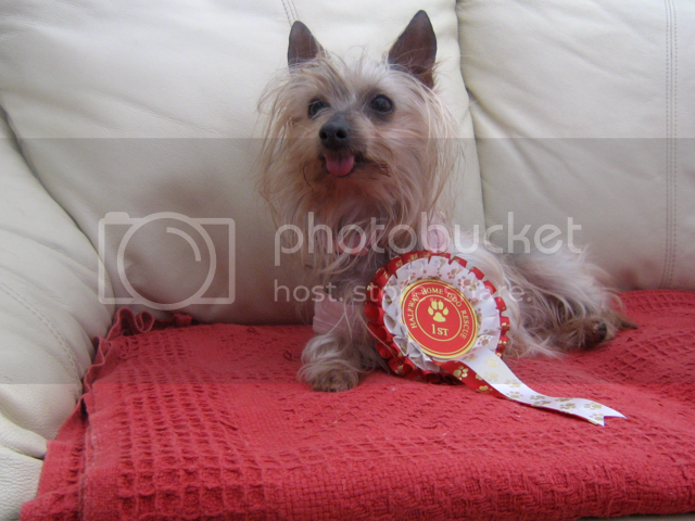 Vote for 2 pictures of Amber for the calendar please AMBER02