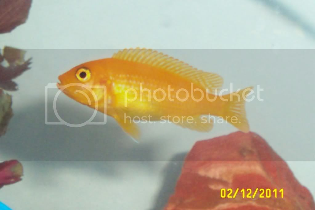Needing Assistance in identification of fish... 2122011023
