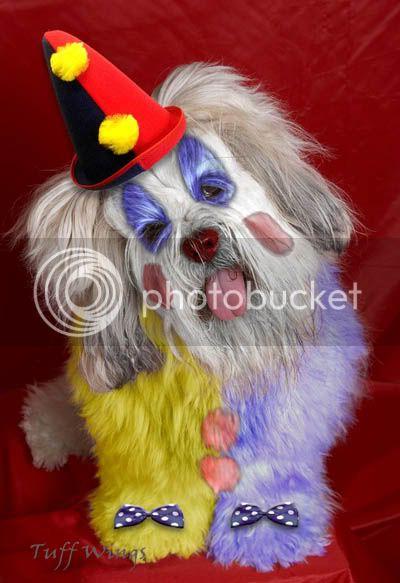 Shtazë simpatike Clown2